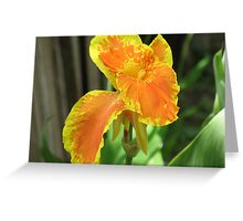 Cana Lily Greeting Card