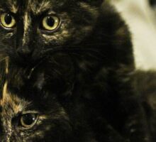 Soli & Nebula the tortie cats #2 Sticker