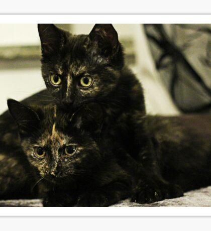 Soli & Nebula the tortie cats #2 Sticker