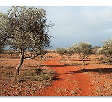 Olive Grove by janic