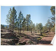 Rawnsley Bluff Creek bed in Flinders ranges Poster