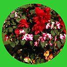 Begonias Vignette by kathrynsgallery
