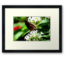 Butterfly- Brown  Framed Print