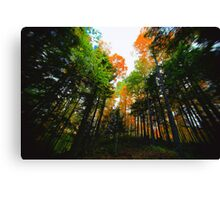 A Break in  the Canopy Canvas Print