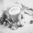 GOLDEN ARK RESCUE (AUST) INC. Christmas 4 by wandererswolves