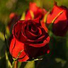 Ruby Red Birthday Roses  by Georgia Mizuleva