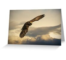Angry Hawk Greeting Card