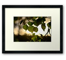 NSW scapes Framed Print