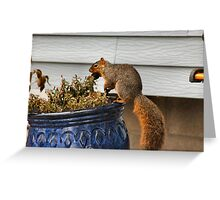 Pot Topper Squirrel Greeting Card