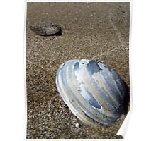 Lake Erie Mussel Shell Poster