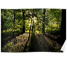 Secrets of a Bluebell Woodland Poster