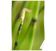 Little caterpillar Poster