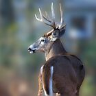 Backyard Buck by Imagery