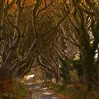 The Dark Hedges in Autumn by Derek Smyth