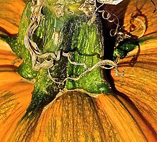 Fancy Pumpkin Stem by Cee Neuner