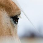 The Eye of the Horse by Valerie Rosen