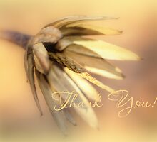 Thank You Greeting Card - Tulip Poplar Seed Pod by MotherNature