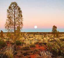 Desert Dusk by Pauline Tims