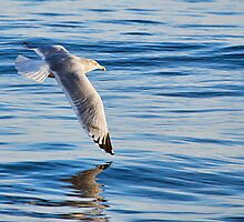 Wing Dipping by Susie Peek