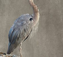 The Great Blue Heron by LarryB007