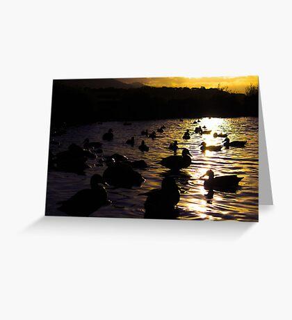 Ducks silhouette sunset  Greeting Card