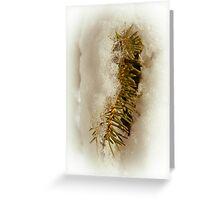 Pine Tree Beauty Greeting Card