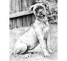 Bullmastiff Puppy Portrait Photographic Print