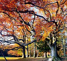 Autumn Beech by mikebov