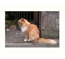 Hamish McHamish the Famous St Andrews Cat Art Print