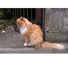 Hamish McHamish the Famous St Andrews Cat Photographic Print