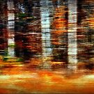 Time Flies Through Forests Changing by paintingsheep