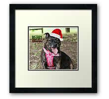 Christmas Staffy Framed Print