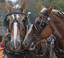 Draft Horses by BearheartFoto