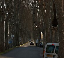 Plane trees in the evening. Provence. by RickinNR