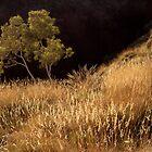 Oxer Lookout, Karijini National Park, Australia by Kath Salier