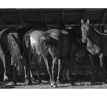 Dark Horse Photographic Print
