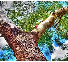 Trees 6 Photographic Print