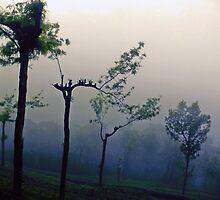 Munar rain n fog by noor786