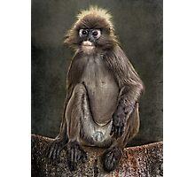Cheeky Monkey Photographic Print
