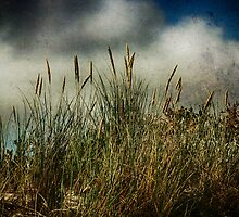Beach Grasses by Annela