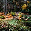 Late Autumn by Olga Zvereva