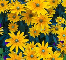 Black-eyed Susan Flowers by Michael Russell