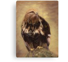 Aletta - Rough Legged Hawk Portrait Canvas Print