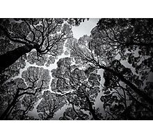 Overhead BW Photographic Print