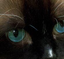 Beautiful Ragdoll Cat Sticker