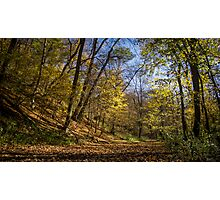 walking on the forest Photographic Print