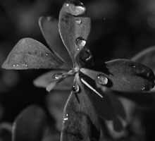 FLOWER DROPS WATER  by sommergold