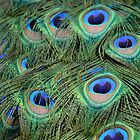 Peacock Feathers 1 by Bami