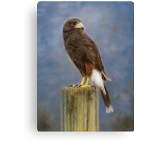 Scout in the Clouds - A Harris' Hawk Portrait Canvas Print