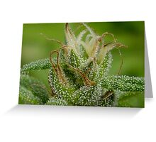 Trich-edelic Greeting Card